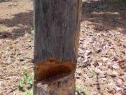 ग्रामीणों द्वारा वन भूमि पर अवैध कब्जा