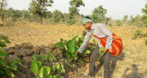 गरियाबंद वन मंडल के 70 समितियों में तेन्दूपत्ता तोड़ाई शुरू