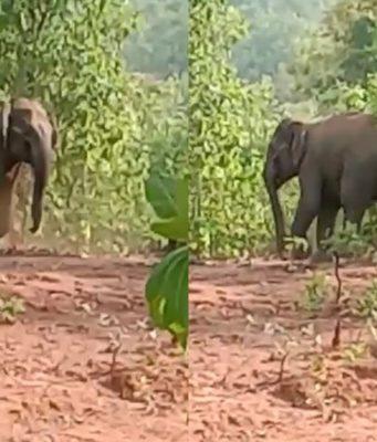 हाथियों का दल,
