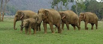 हाथियों