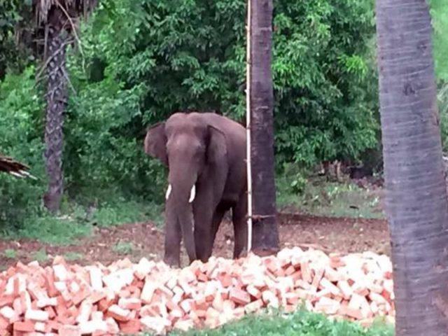 हाथियों को उत्पात