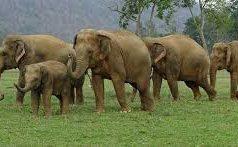हाथियों का आतंक