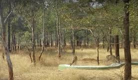 जंगल सफारी