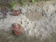 तेंदुए के पैर